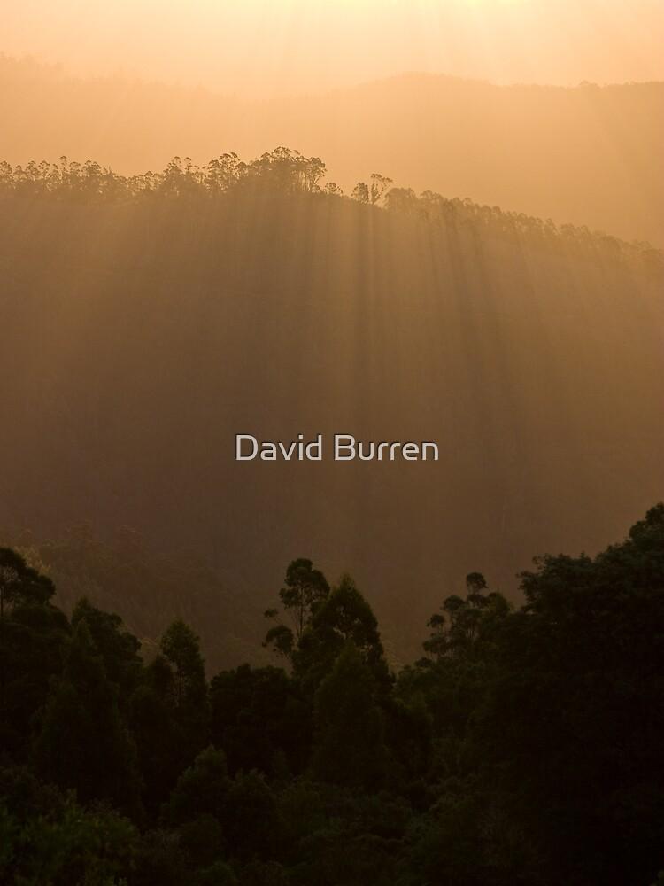 Sunset over the forest by DavidBurren