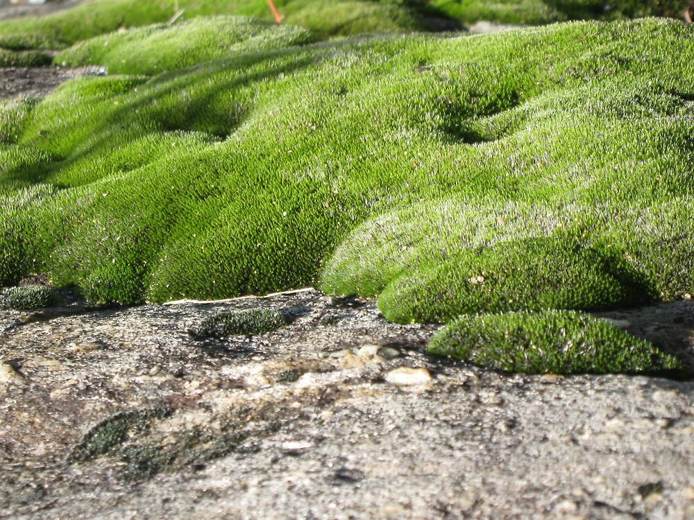 Mossy Rocks by rebeccagwood
