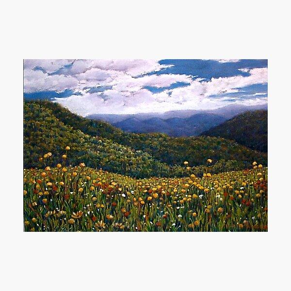 'Wonder of Wildflowers, Mt Buller' Photographic Print