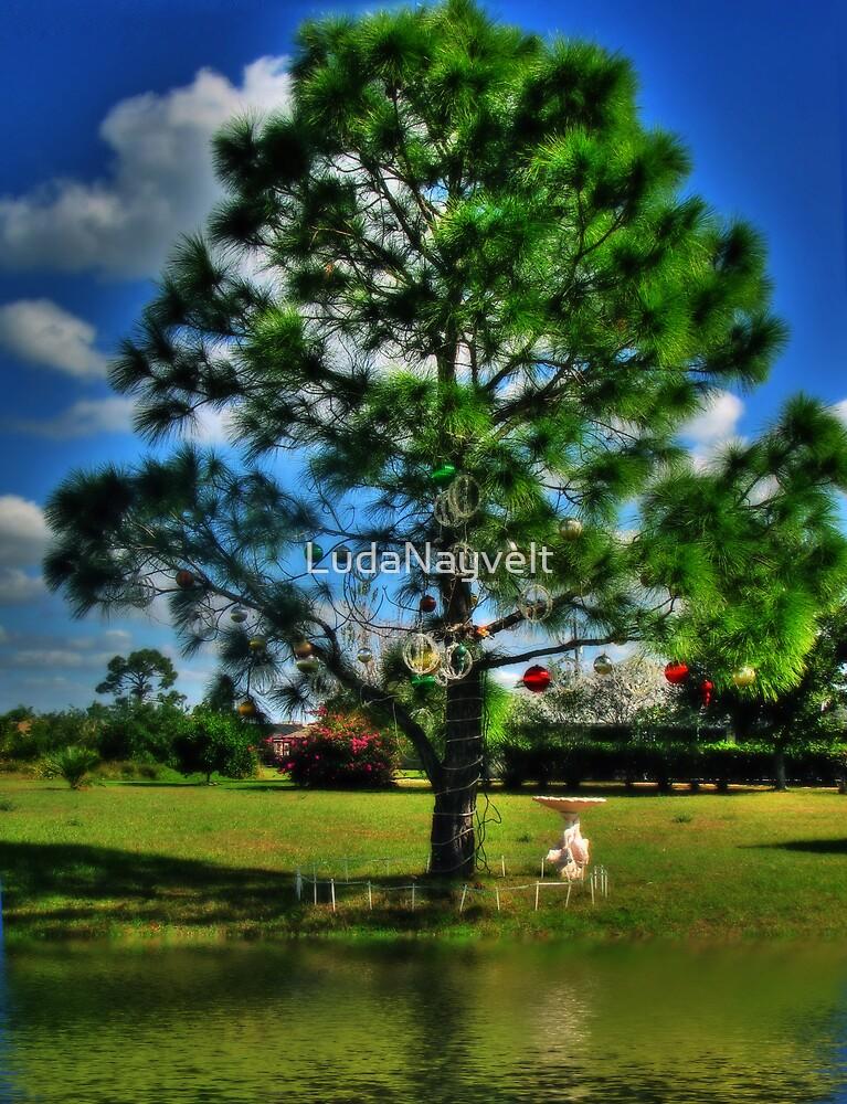 Christmas Tree from Florida by LudaNayvelt