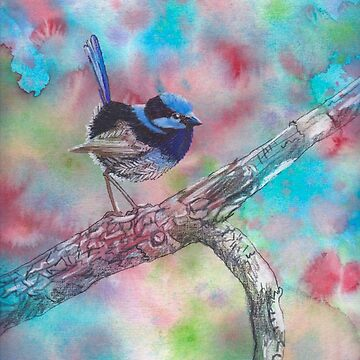 Fairy Wren by vian