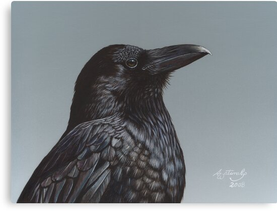 Study of a Raven by artbyakiko