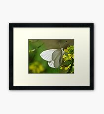 Springtime Fresh White Butterfly Framed Print