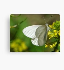 Springtime Fresh White Butterfly Canvas Print