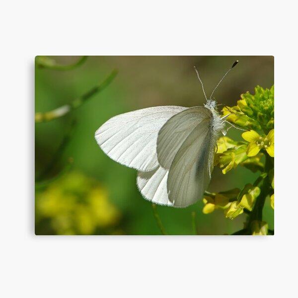 Springtime Fresh White Butterfly Canvas Print