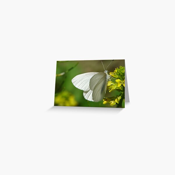 Springtime Fresh White Butterfly Greeting Card