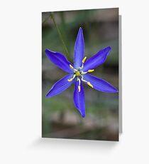 Tufted Blue Lily - Thelionema caespitosum Greeting Card