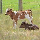 Calves on the Back Roads Near Ross by Wendy Dyer