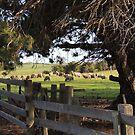 Country Scene near Ross, Tasmania by Wendy Dyer