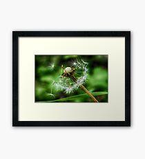 Dandelion Macro  Framed Print