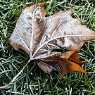 Frosty the leaf by Trish Peach