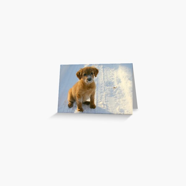 The Life of a Puppy Greeting Card