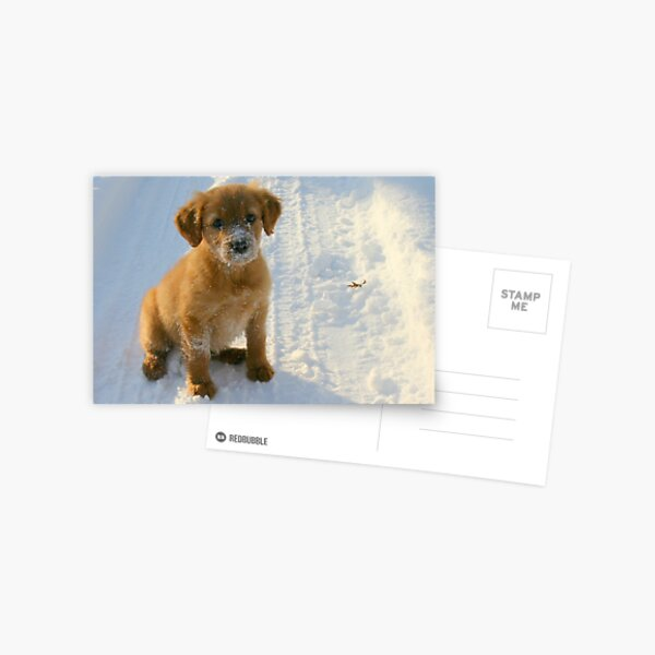 The Life of a Puppy Postcard
