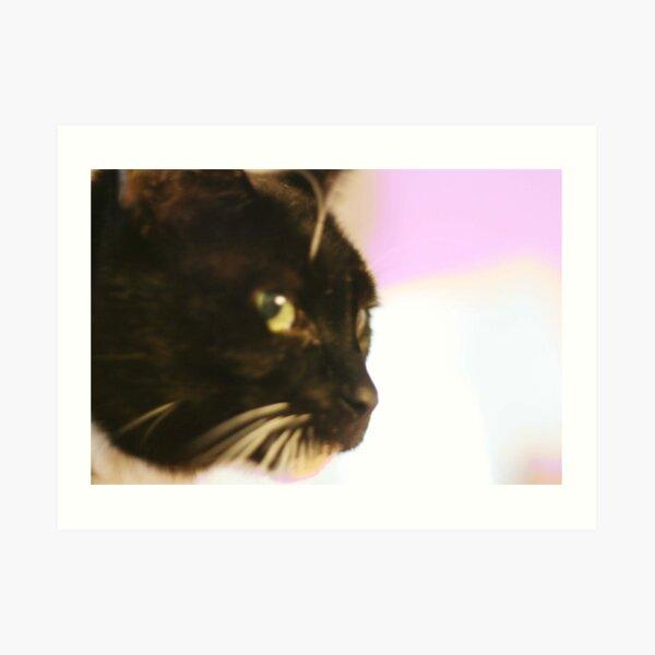 Cat looks here... Art Print