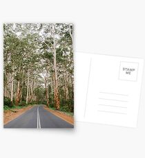 Into The Karri Forest Postcards