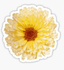 Beautiful Yellow Marigold Vector Isolated Sticker