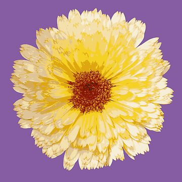 Beautiful Yellow Marigold Vector Isolated by taiche