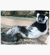Relaxing Lemur Poster