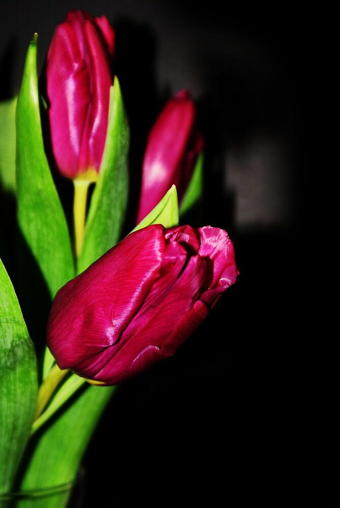 Tulips Still Life by Vandit