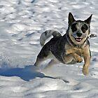 Snow Leaper by Fotography by Felisa ~