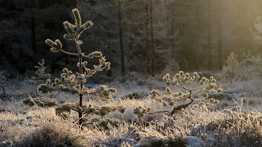 'Almost last light of the year I' by Petri Volanen