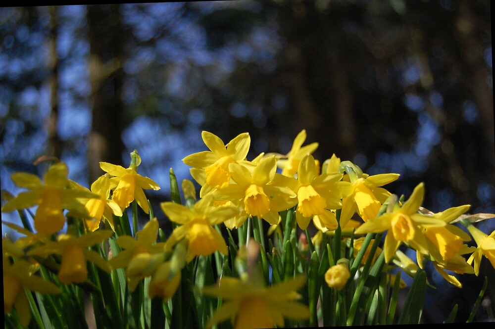 Spring is in the air by Sandra Oddy