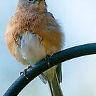Happy Birthday from Fluffy Bluebird by Bonnie T.  Barry