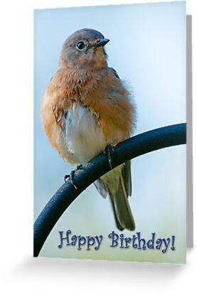 Happy birthday from fluffy bluebird greeting cards by bonnie t happy birthday from fluffy bluebird by bonnie t barry m4hsunfo