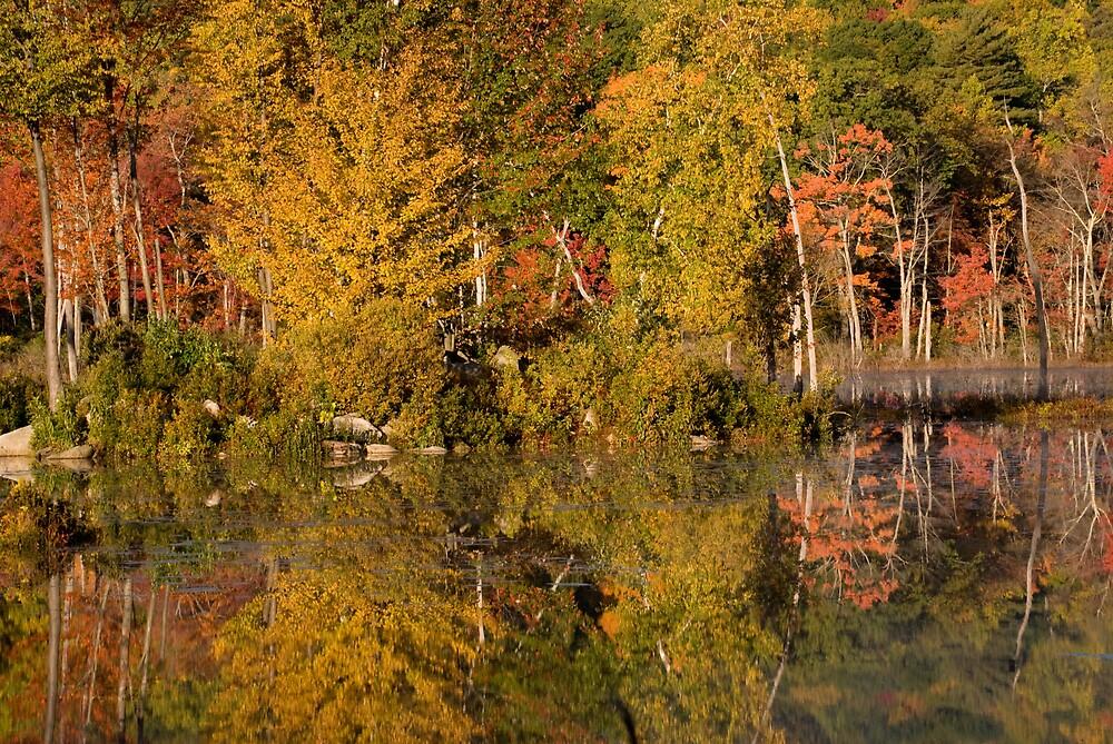 Beaver Pond by roscoedv
