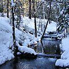 The Little Bear Creek = Alta, California by NancyC