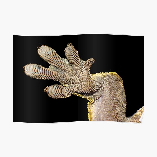 Crested Gecko Foot Poster