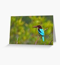 White Breasted Kingfisher - Sri Lanka Greeting Card