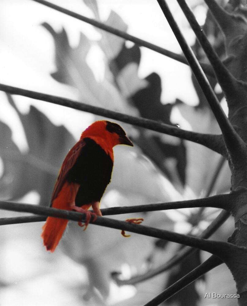 Pretty Bird by Al Bourassa