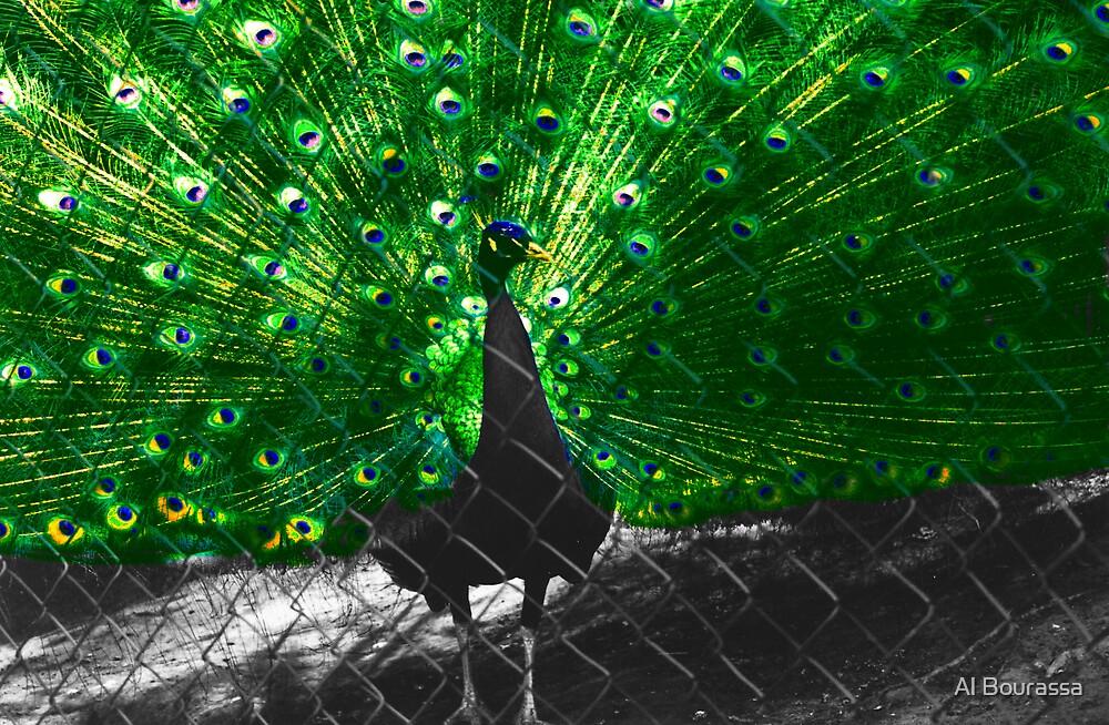 Peacock Beauty by Al Bourassa