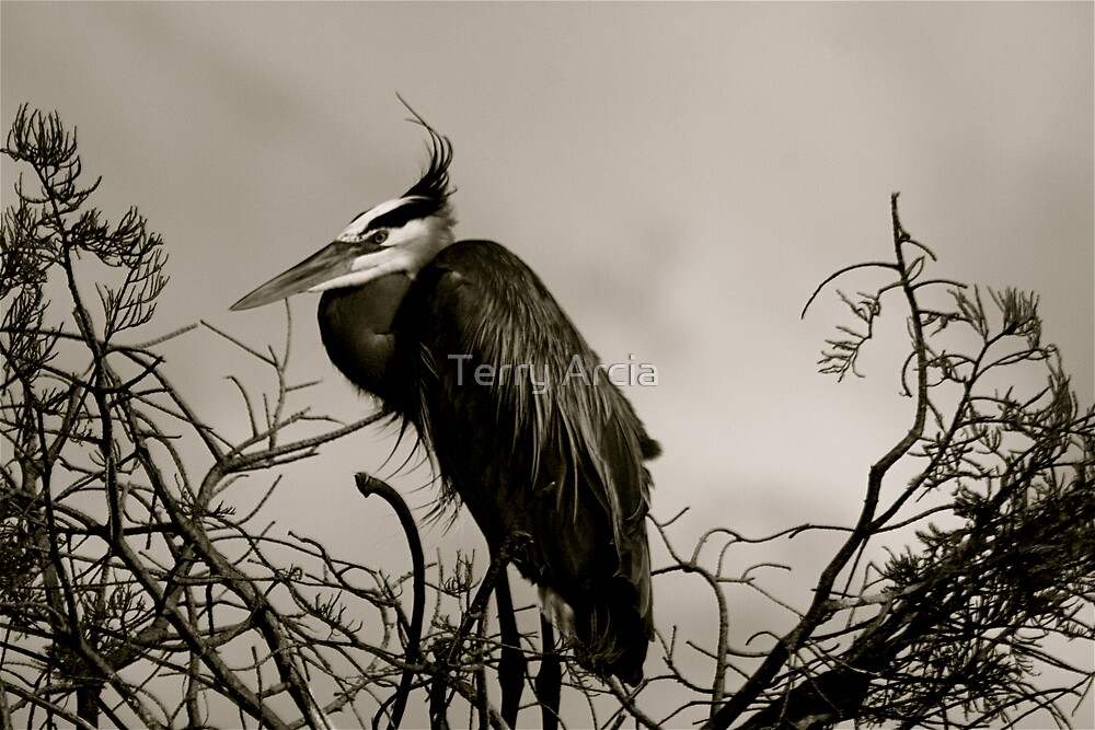 Big Bird by Terry Arcia