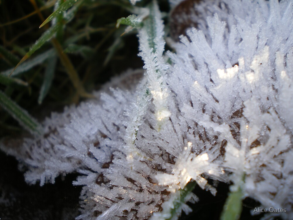 Frosty leaf 2 by Alice Oates