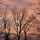 Sunrise Through The Branches by silverdragon