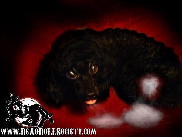 MetalGypsy's Dog, Janne by DeAdDoLLSociety