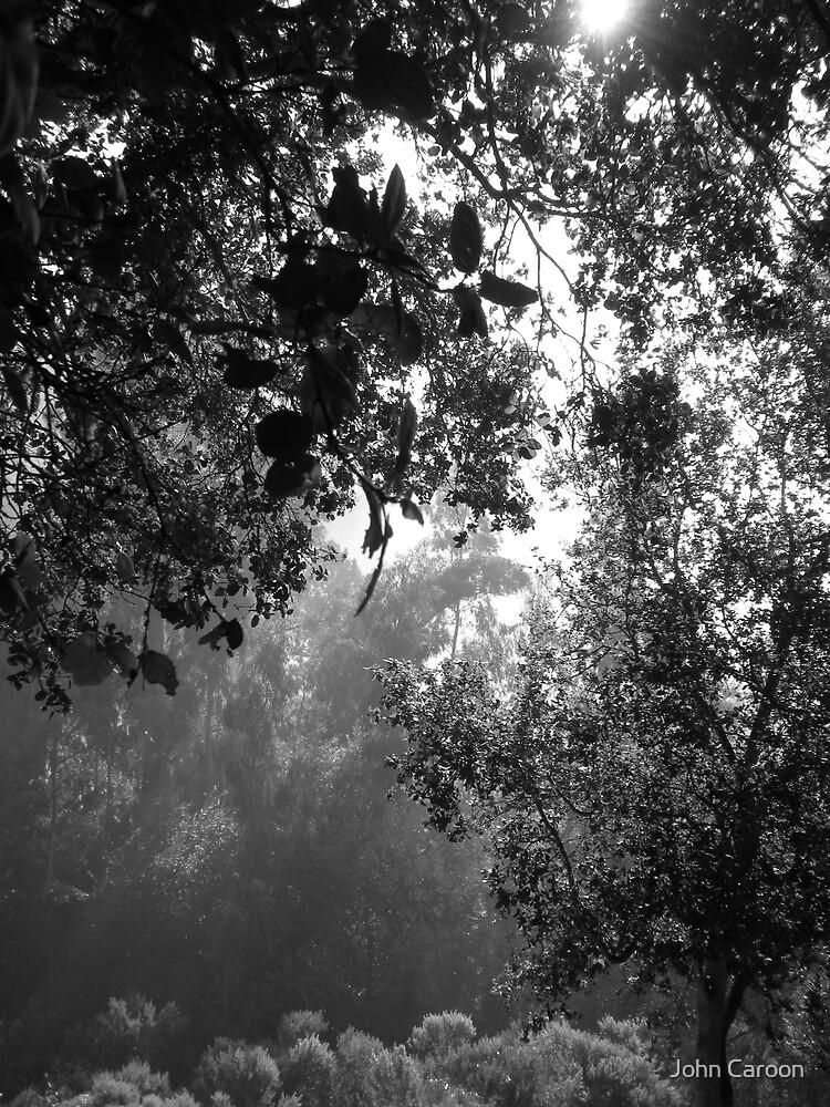 Into the light by John Caroon