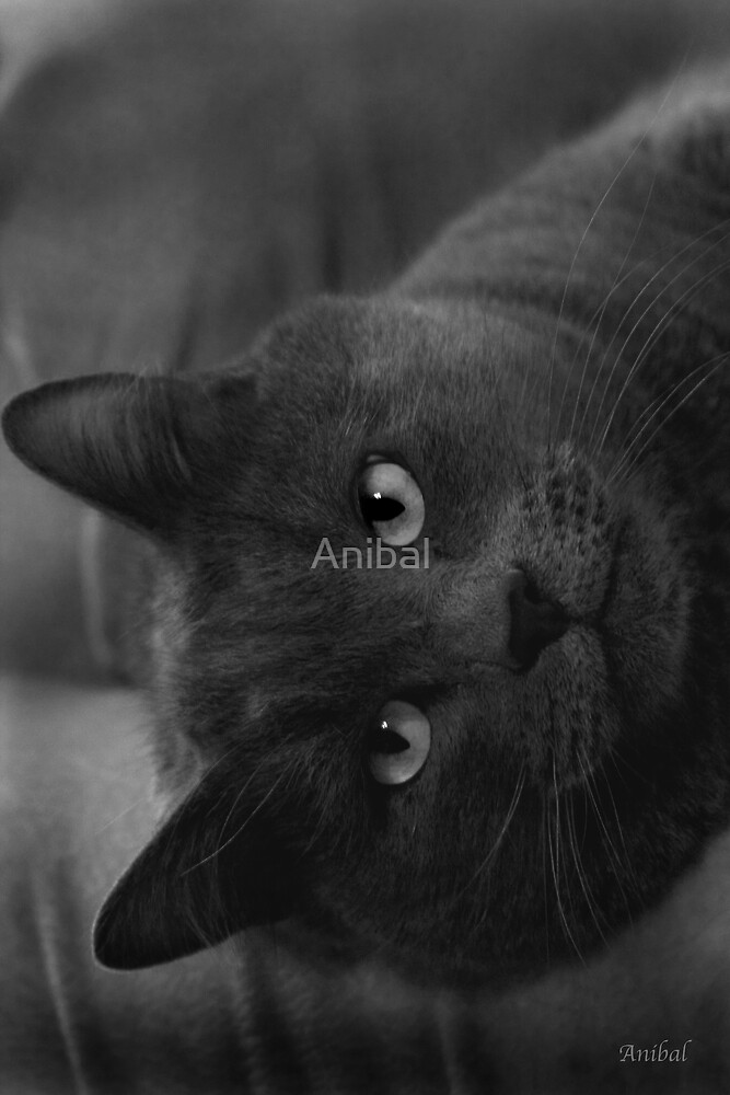 Heres look'n at you... by Anibal
