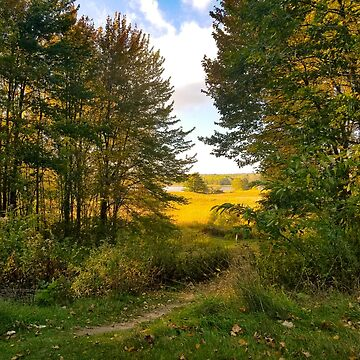 trees and sky golden Maine landscape by cduby