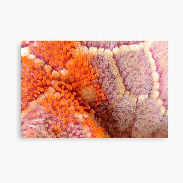 Mosaic Sea Star Macro Metal Print