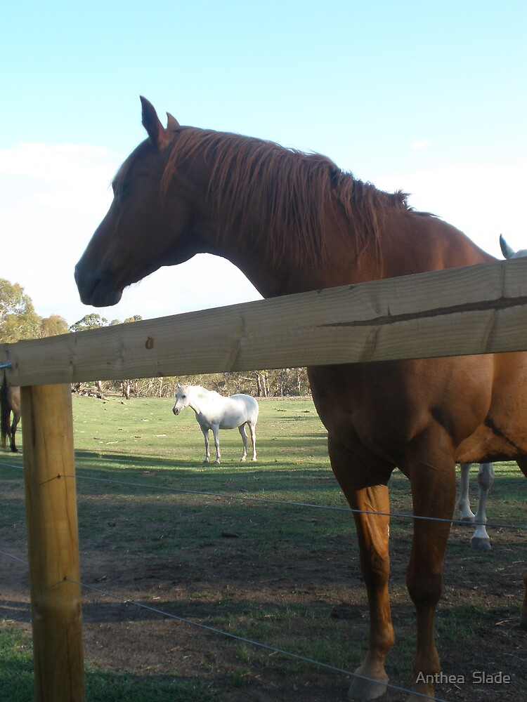 Doc - The Horse from The Snowy River Legend by Anthea  Slade
