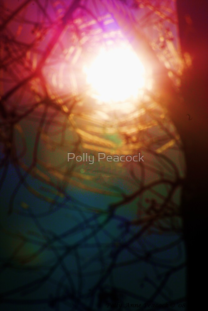 Colorful Dreamcatcher by Polly Peacock