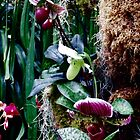 Garden of Paphiopedium Orchids_Vertical by Hope Ledebur