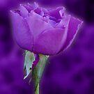 Purple Rose by Sandy Keeton