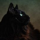 Black Maine Coon by lucyliu