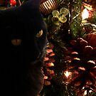 In the Tree by DesignsByDeb