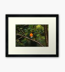 Robin in tree Framed Print