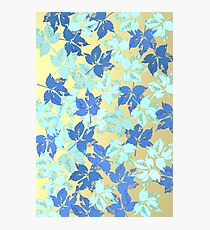 Bluish leaves over bright background Photographic Print